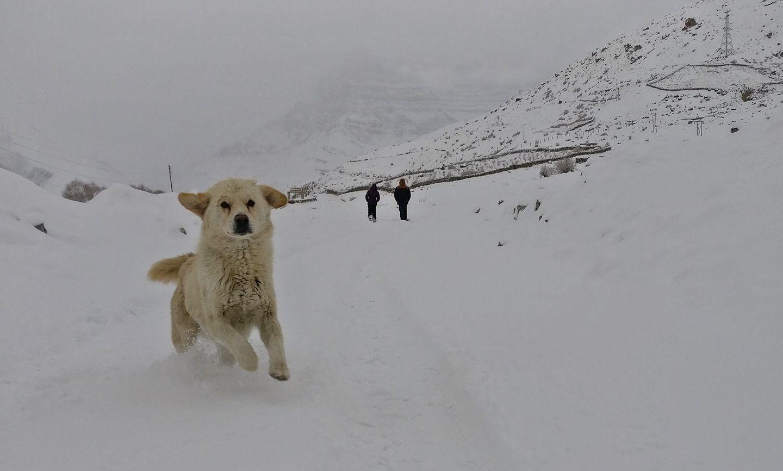 spiti-winter-adventure