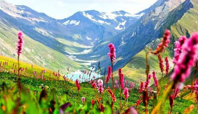 yumthang-valley-of-flowers